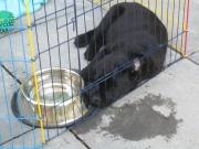 puppytraining Benchtraining