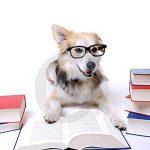 de-hond-leest-boek-20311157