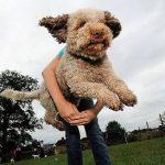 dogdance Margje Rutsen