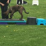 Boaz, puppy